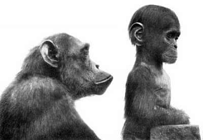 ヒトがサルのネオテニーだと示す画像